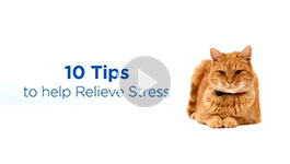 10 tips for å minske stress hos katter